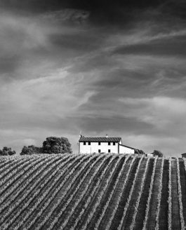 Petra Winery in B&W