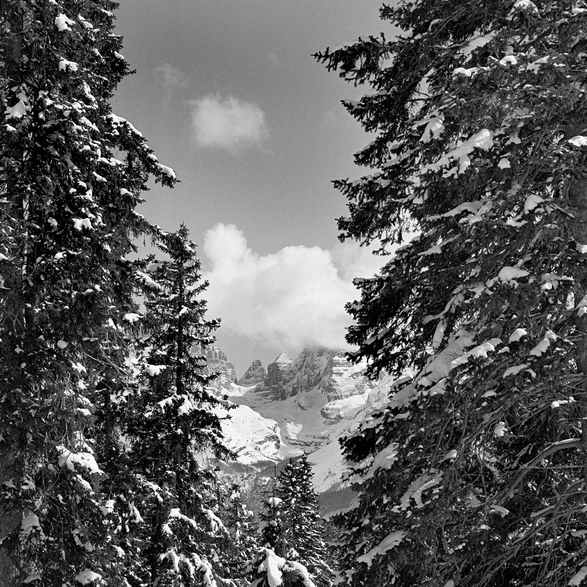 016 | Rolleiflex 3.5T | ©AlbertoBregani