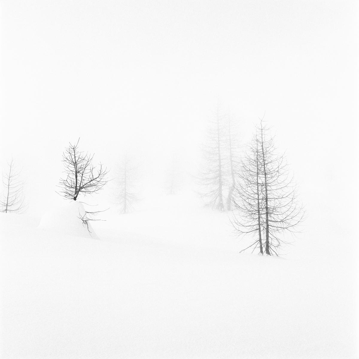 020 | Hasselblad 501C | ©AlbertoBregani