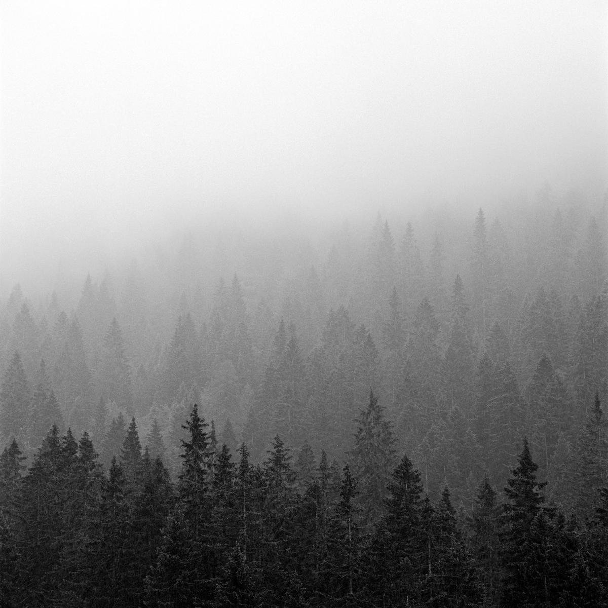 012 | Hasselblad 501C | ©AlbertoBregani