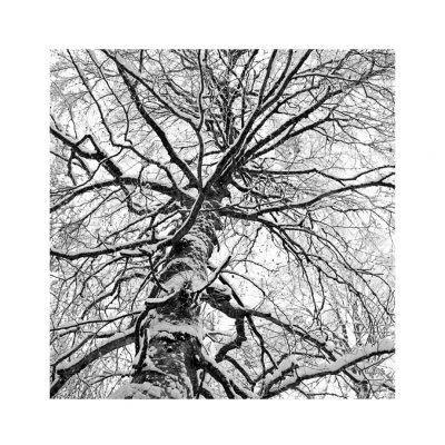 Catalogo Replica 6x6 | N.22 - Albero nudo, Inverno