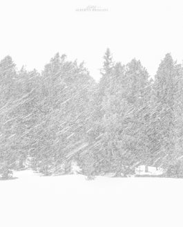 Storie di fotografie #02 | Nevicata