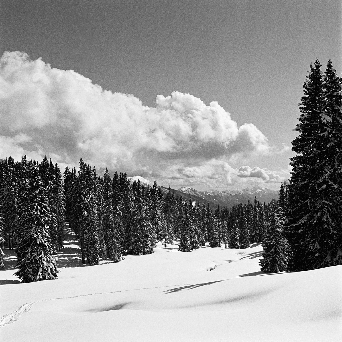 025 | Hasselblad 501C | ©AlbertoBregani
