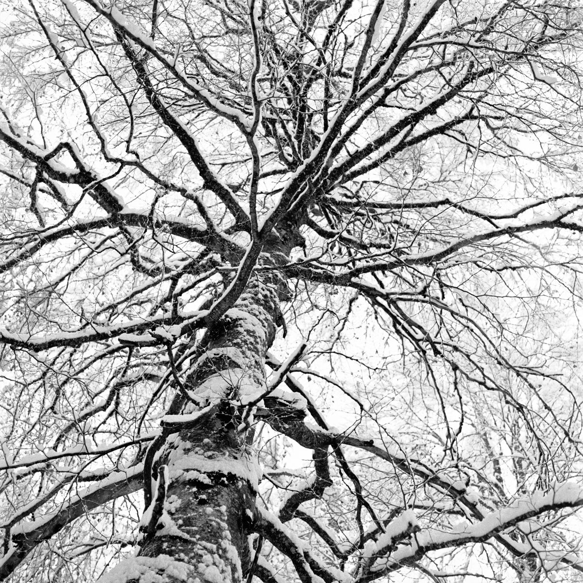 024 | Hasselblad 501C | ©AlbertoBregani