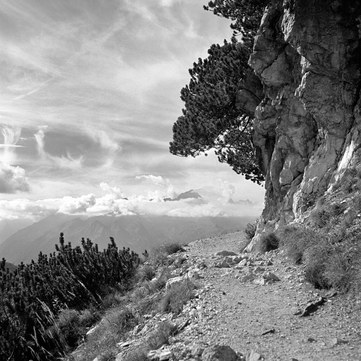 017 | Rolleiflex 3.5T | ©AlbertoBregani
