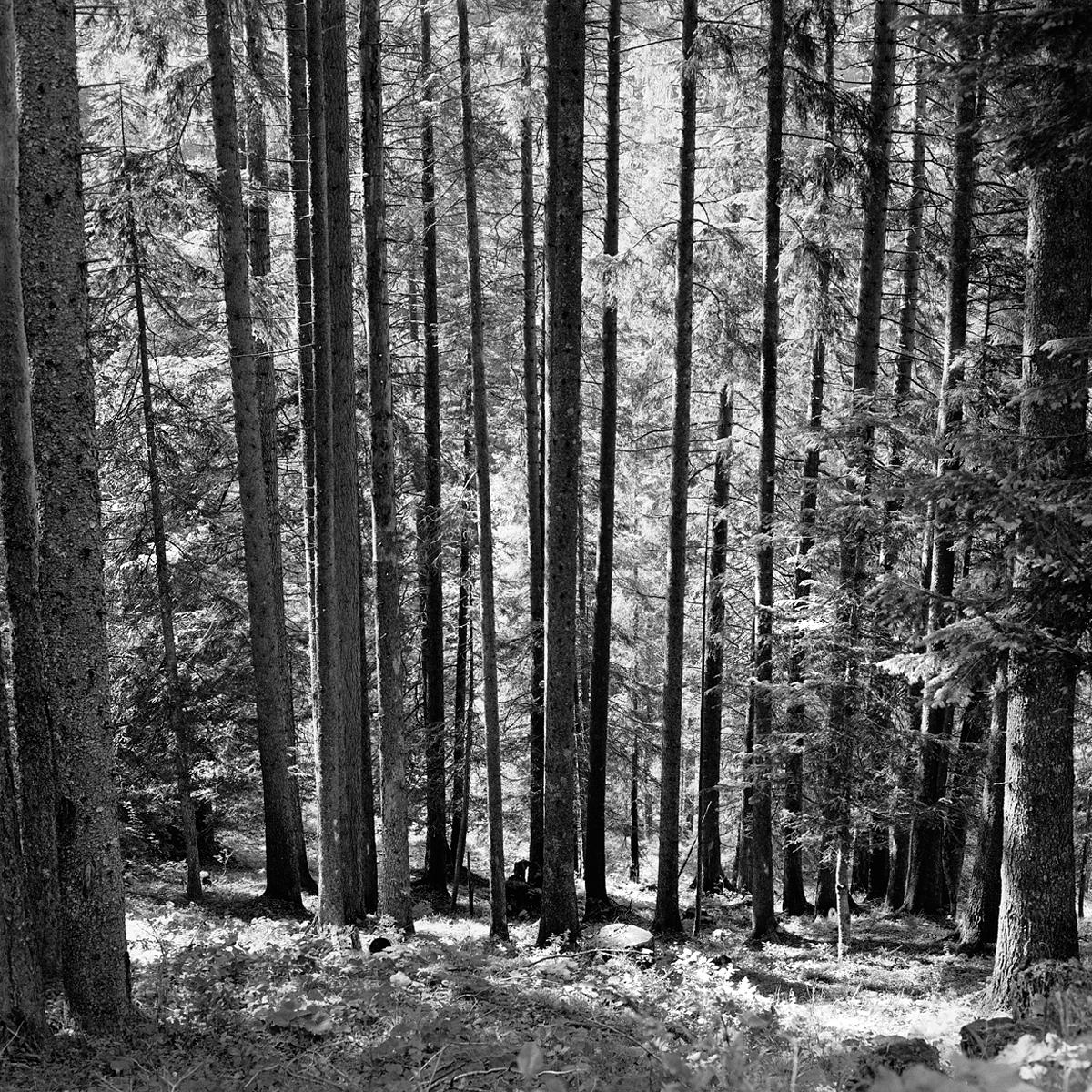 015 | Rolleiflex 3.5T | ©AlbertoBregani