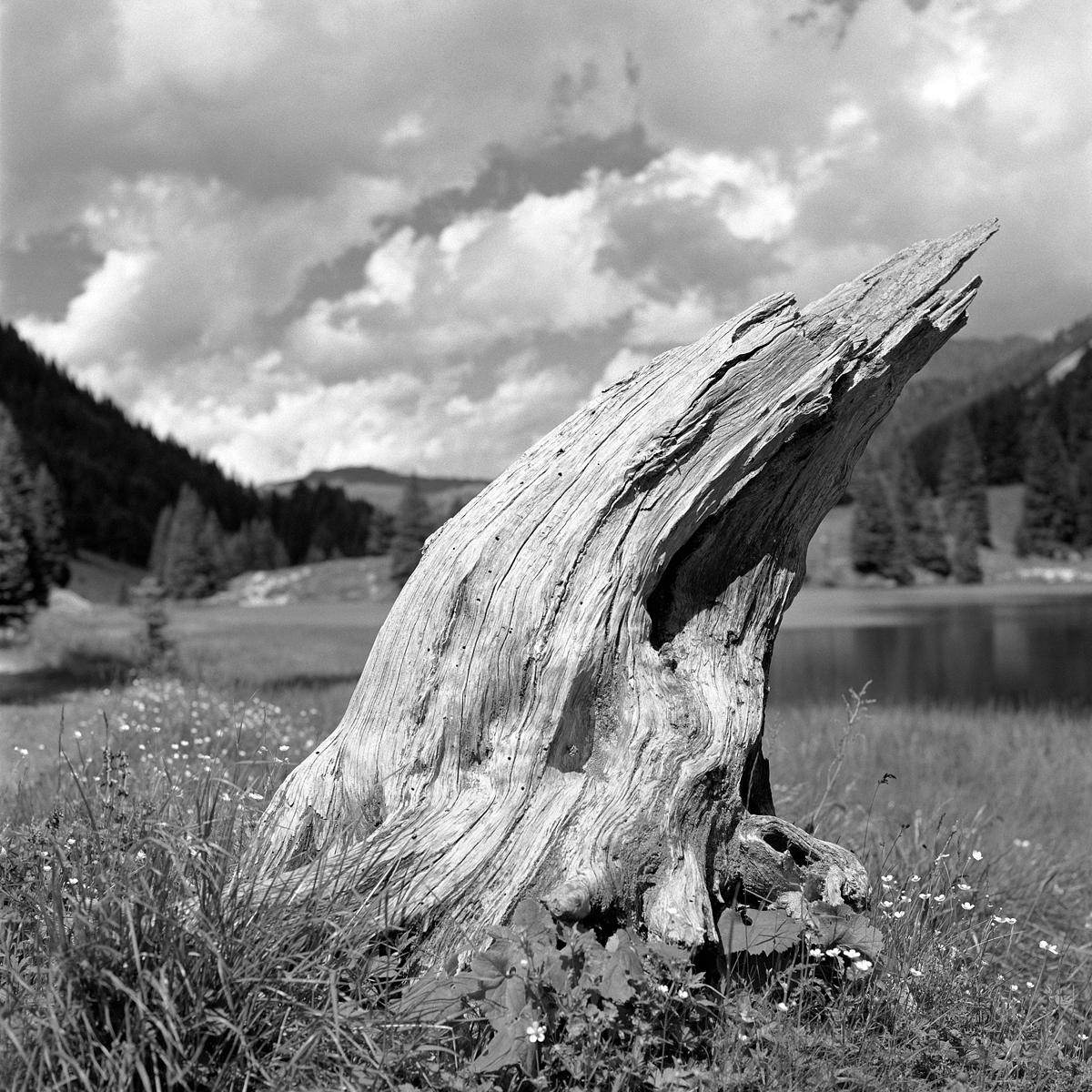 04 | Hasselblad 501C | ©AlbertoBregani