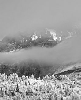 Il bianco e nero. Un viaggio silenzioso